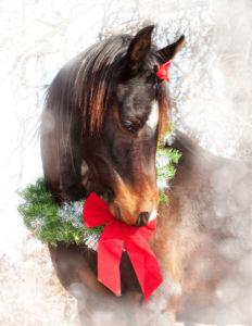Фотообои лошадь на рождество (animals-0000386)