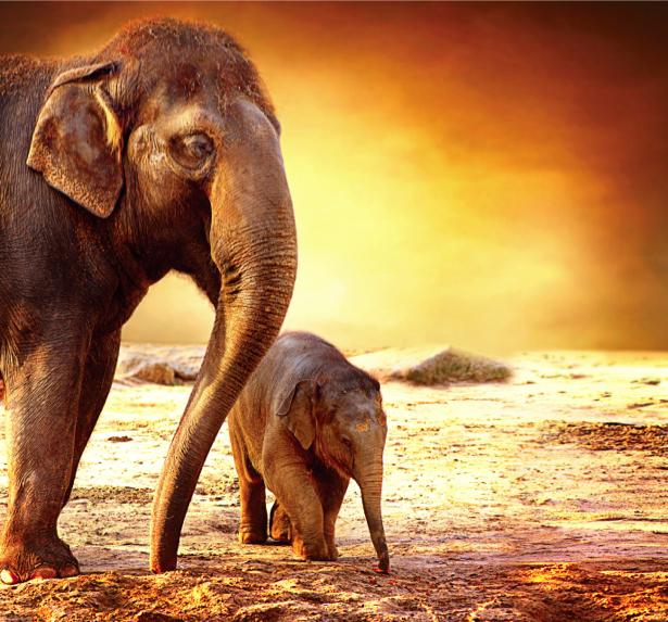 Фотообои Семья слонов фото (animals-0000432)
