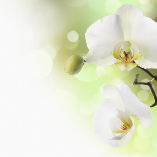 Белая орхидея фотообои цветов на стену (flowers-0000048)