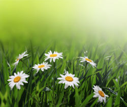 flowers-0000138