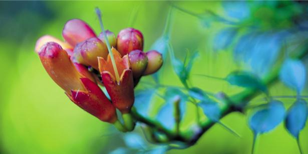 Фотообои на стену цветок - Ветка красного цветка (flowers-0000351)