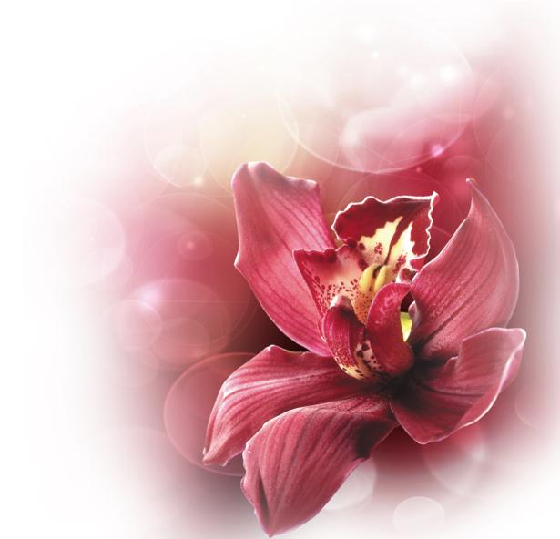 Фото обои на стену - Бордовая орхидея (flowers-0000384)