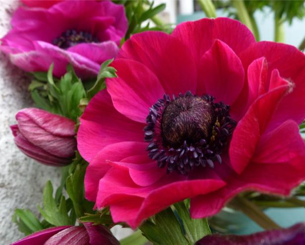 Обои фото цветок ветка красного цветка (flowers-0000468)