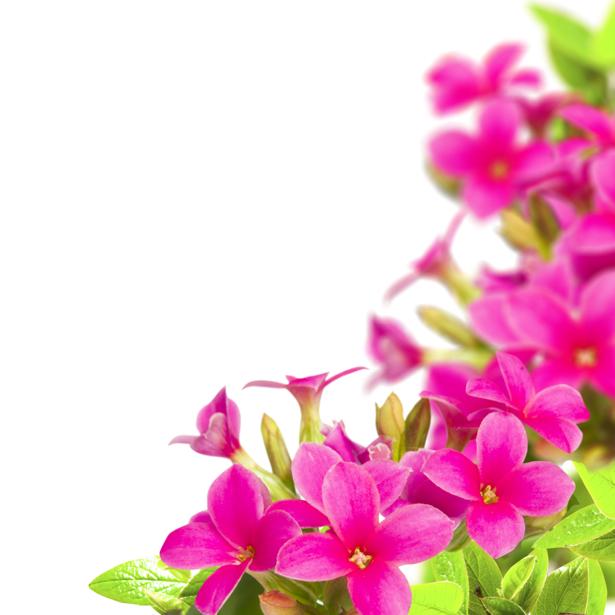 Фото обои розовый цветок (flowers-0000570)