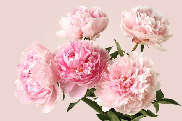 Фотообои букет пион (flowers-774)