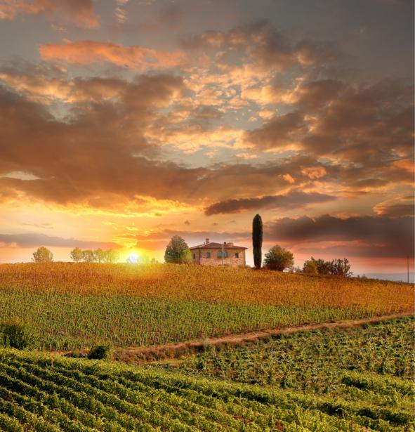 Фотообои красивый виноградник закат (nature-0000630)