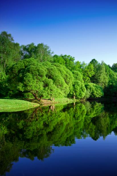 Фотообои пейзаж река и лес (nature-00208)