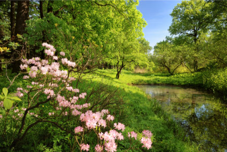 Фотообои цветение в лесу озеро (nature-00530)