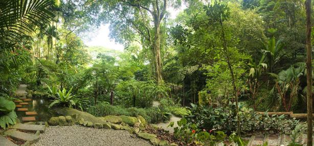 Фотообои Тропический сад (nature-881)
