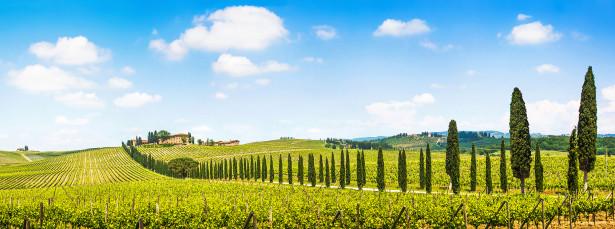 Фотообои виноградники Тосканы (panorama-48)
