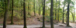 panorama_0000019