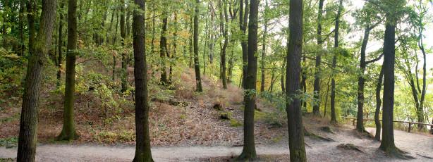 Фотообои ландшафт в лесу (panorama_0000019)