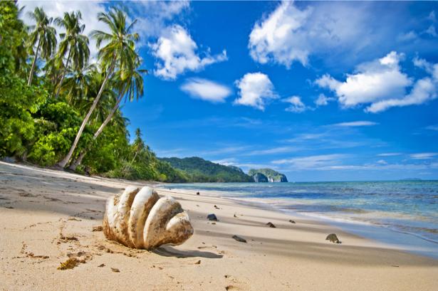 Фотообои море берег пальмы ракушка (sea-0000190)