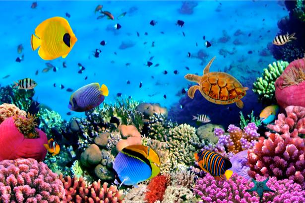 Фотообои 3д кораллы рыбки океан (underwater-world-00006)