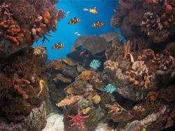 underwater-world-00049
