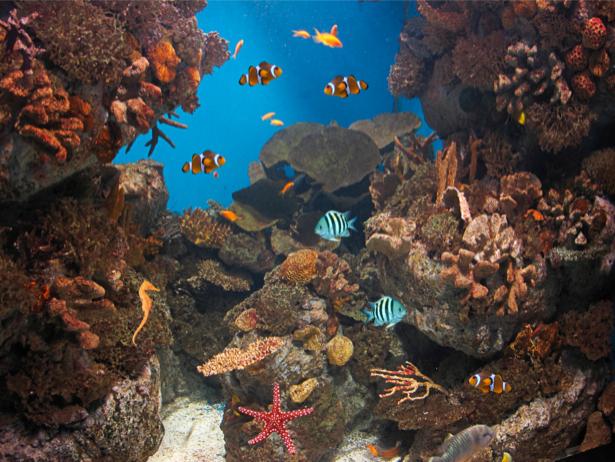 Фотообои кораллы рыбки море риф (underwater-world-00049)