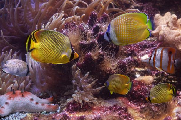 Обои для ванны кораллы, рыбки (underwater-world-00059)