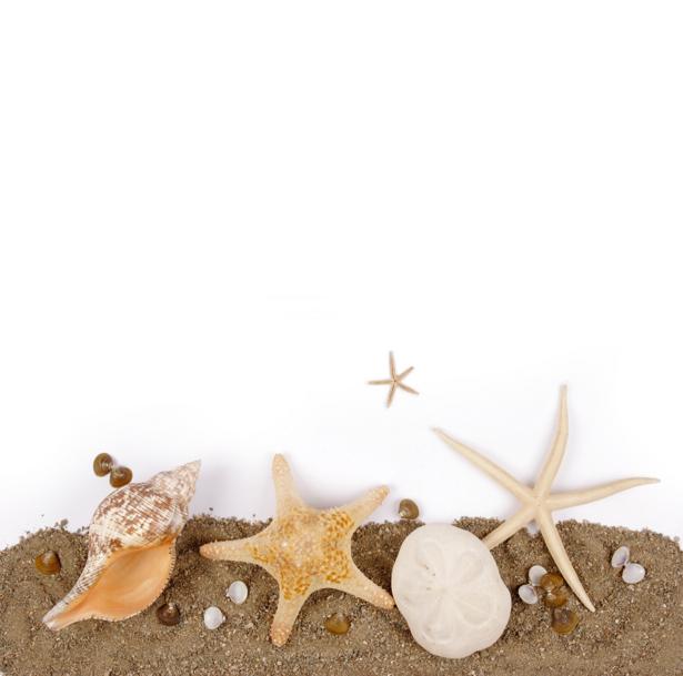 Фотообои - Морские ракушки и звезды (underwater-world-00074)