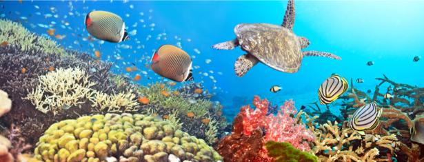 Фотообои морской подводный мир риф (underwater-world-00137)