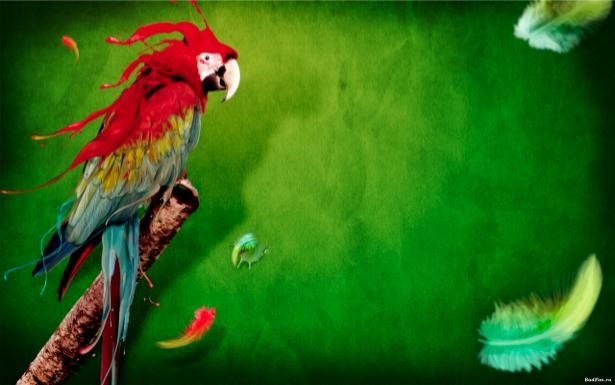Фотообои попугай и перья (animals-0000048)