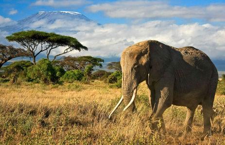 Фотообои Слон в природе (animals-541)
