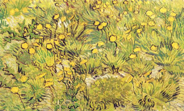 Желтые цветы Фото картины цветы (art-0000154)