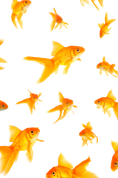 Фотошторы с золотыми рыбками (bathroom-curtain-00011)