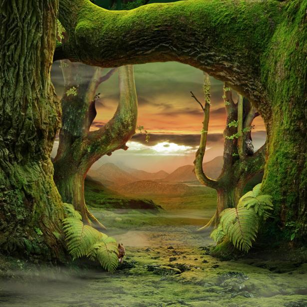 Фотообои в детскую сказочный лес 2 (fantasy-0000152)