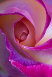 flowers-0000064