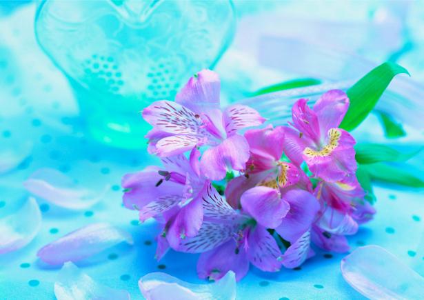 Ирисы Фотообои на стену (flowers-0000213)