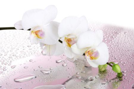 Обои фото цветок ветка орхидеи (flowers-0000520)