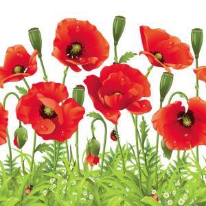 Фото обои для стен красные маки (flowers-0000596)