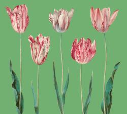 flowers-807
