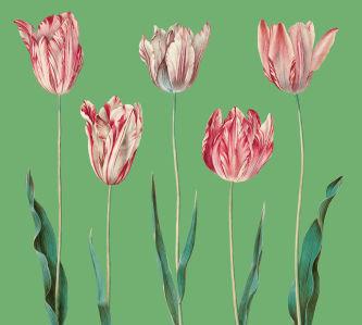Фотообои Пять тюльпанов (flowers-807)