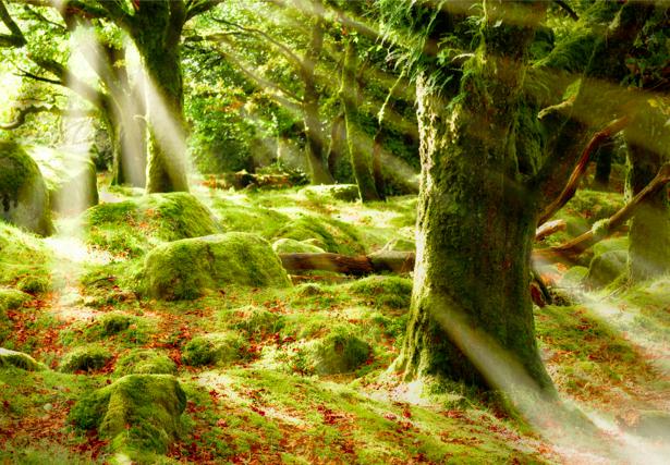 Фотообои с природой лесная чаща (nature-00003)