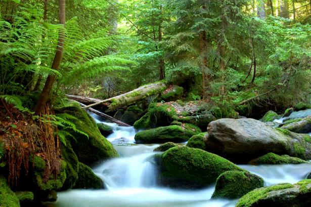 Фотообои лесной водопад (nature-0000705)