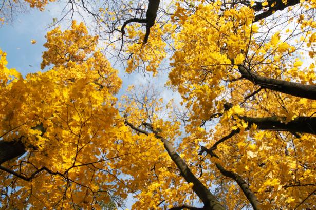 Фотообои деревья осенью (nature-0000801)