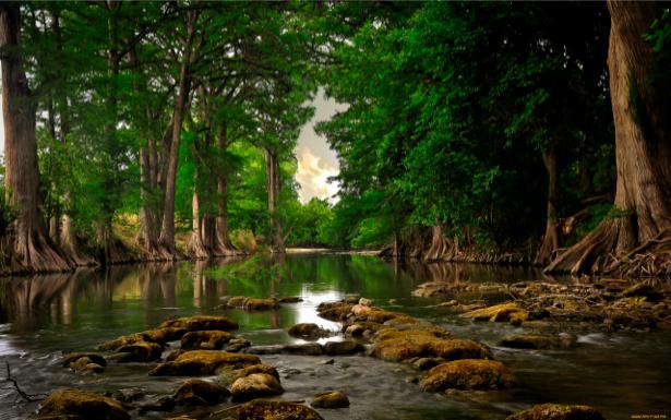 Фотообои с природой река в лесу (nature-00086)