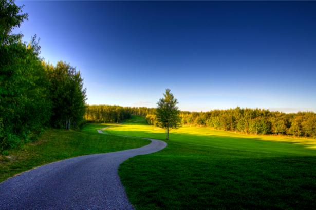 Фотообои с природой дорога лес поле (nature-00097)