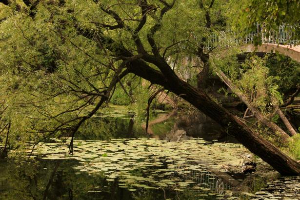 Фотообои с природой озеро, мост (nature-00103)