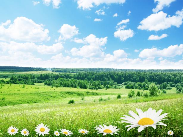 Фотообои виды природы поле с ромашками (nature-00108)