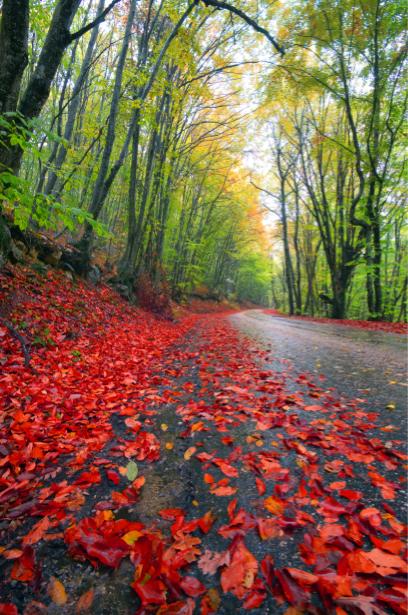 Фотообои дорога лес листопад (nature-00539)