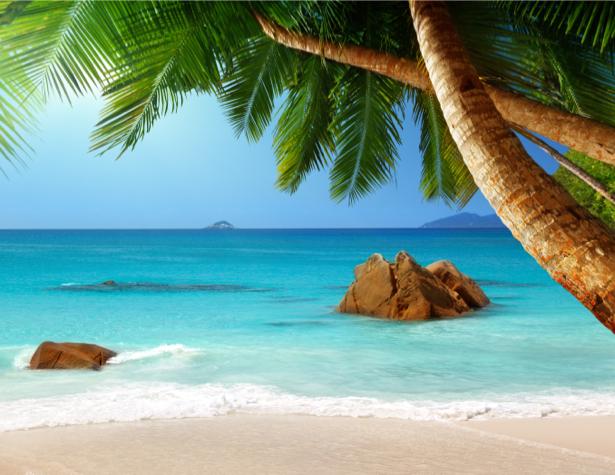 Фотообои Баунти море берег пальмы (sea-0000255)