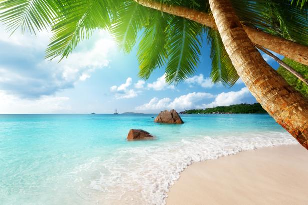Обои пальма пляж