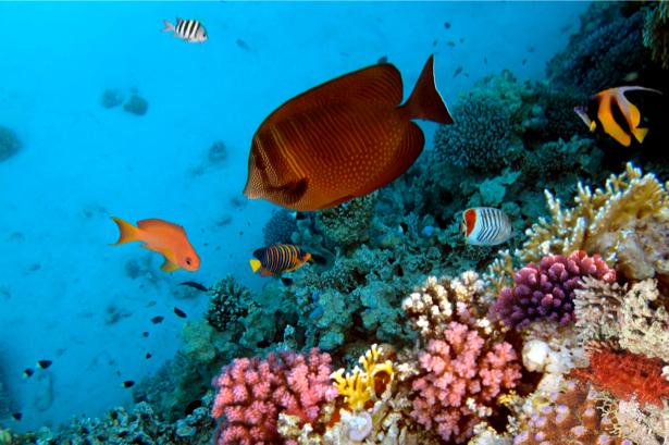 Фотообои море кораллы рыбки глубина (underwater-world-00048)