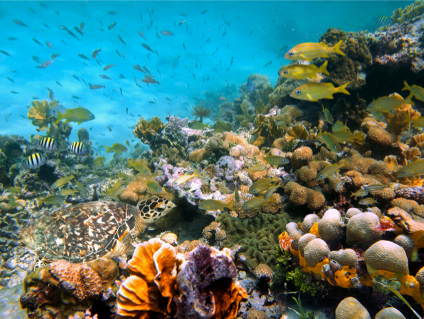 Кораллы рыбки черепахи 3д море обои (underwater-world-00050)