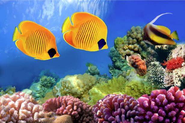 Фотообои в ванную желтые рыбки море (underwater-world-00135)
