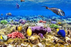 underwater-world-00148