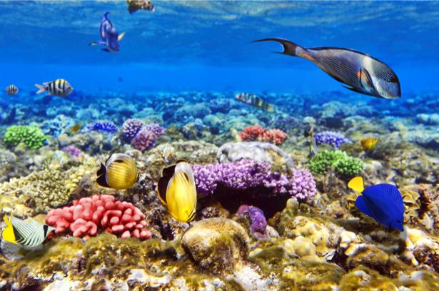 Фотообои ванная фауна рыбки (underwater-world-00148)