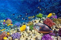 underwater-world-00170